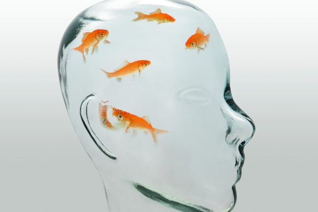 iStock-114246564_gold fish.jpg